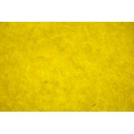 Lokta jaune citron
