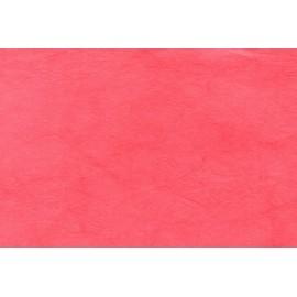 Lokta rouge vermillon
