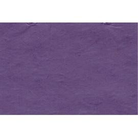 Lokta violet
